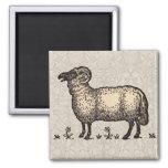 Ejemplo del animal del campo de las ovejas del vin iman de frigorífico