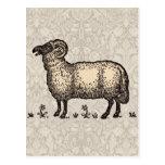 Ejemplo del animal del campo de las ovejas del vin postales