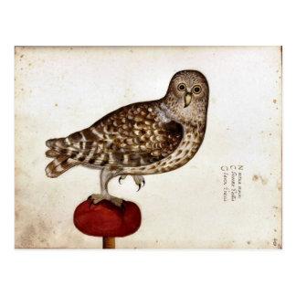 Ejemplo del búho del vintage tarjeta postal