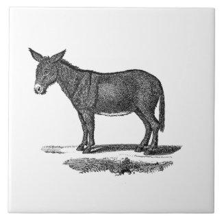 Ejemplo del burro del vintage - burros 1800's azulejo cuadrado grande