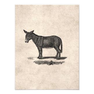 Ejemplo del burro del vintage - burros 1800's impresion fotografica
