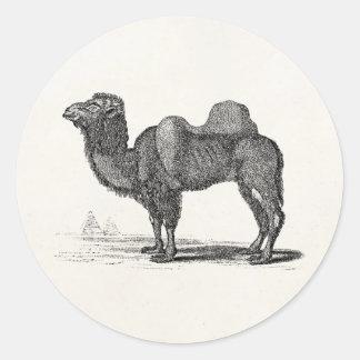 Ejemplo del camello de los 1800s del vintage - pegatina redonda