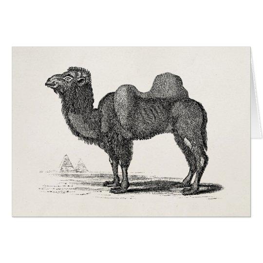Ejemplo del camello de los 1800s del vintage - tarjeta de felicitación