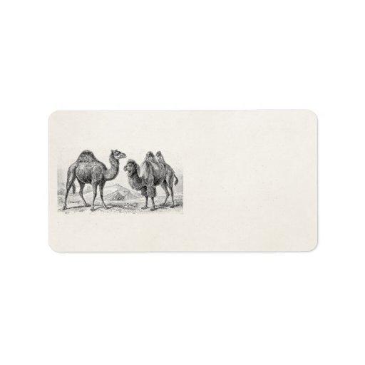 Ejemplo del camello del vintage - camellos etiquetas de dirección
