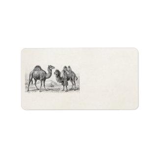 Ejemplo del camello del vintage - camellos etiqueta de dirección