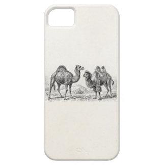 Ejemplo del camello del vintage - camellos iPhone 5 fundas