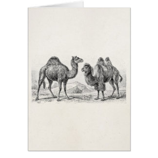 Ejemplo del camello del vintage - camellos tarjeta pequeña