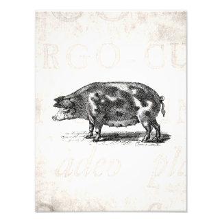 Ejemplo del cerdo del vintage en cerdo de papel vi arte con fotos