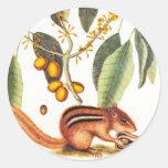 Ejemplo del Chipmunk del vintage Etiquetas Redondas