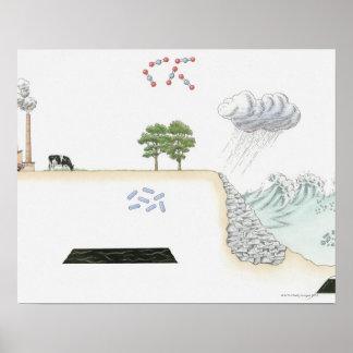 Ejemplo del ciclo de carbono en la tierra posters