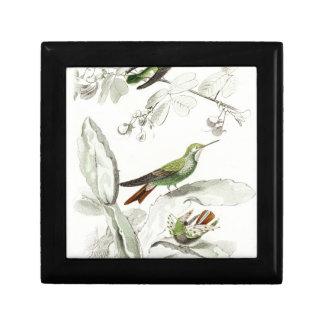 Ejemplo del colibrí del vintage - pájaros 1800's caja de recuerdo