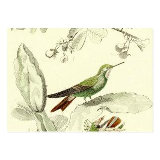 Ejemplo del colibrí del vintage - pájaros 1800's plantilla de tarjeta de visita