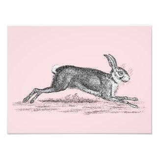 Ejemplo del conejo de conejito de las liebres del cojinete
