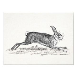 Ejemplo del conejo de conejito de las liebres del  fotografías