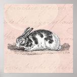 Ejemplo del conejo de conejito del vintage - conej posters