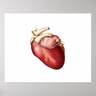 Ejemplo del corazón humano póster