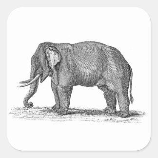 Ejemplo del elefante de los 1800s del vintage - pegatina cuadrada