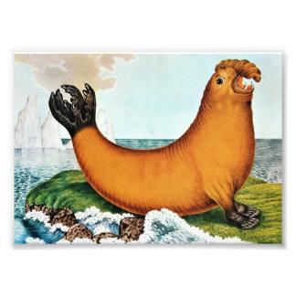 Ejemplo del elefante de mar (Zotl) Cojinete