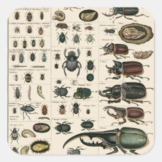 Ejemplo del escarabajo del vintage pegatina cuadrada