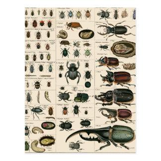 Ejemplo del escarabajo del vintage postales