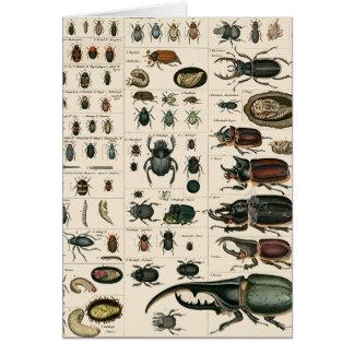 Ejemplo del escarabajo del vintage tarjeta de felicitación