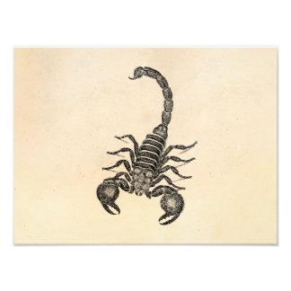 Ejemplo del escorpión de los 1800s del vintage - e fotografías