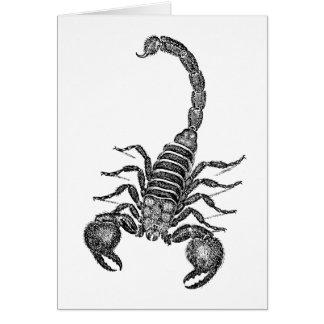 Ejemplo del escorpión de los 1800s del vintage - e tarjeta pequeña