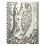 Ejemplo del esqueleto del camaleón libros de apuntes