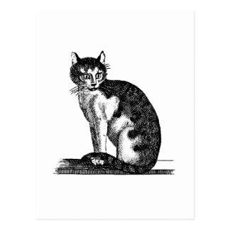 Ejemplo del gato de casa de los 1800s del vintage  tarjeta postal