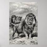 Ejemplo del gato grande de Lionesse del león de lo Impresiones