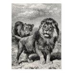 Ejemplo del gato grande de Lionesse del león de Postal
