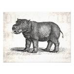 Ejemplo del Hippopotamus de los 1800s del vintage  Fotografias