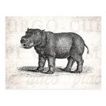 Ejemplo del Hippopotamus de los 1800s del vintage  Postales