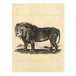 Ejemplo del león del vintage - animal del africano tarjetas postales