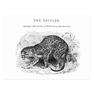 Ejemplo del leopardo del vintage postal