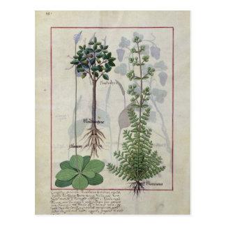 """Ejemplo del """"libro de las medicinas simples"""" 2 tarjeta postal"""