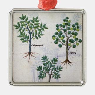 Ejemplo del 'libro de las medicinas simples ornamento para reyes magos