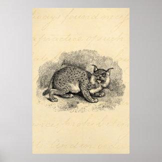 Ejemplo del lince del gato de Bob de los 1800s del Impresiones