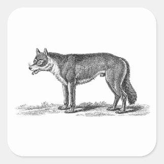 Ejemplo del lobo del vintage - plantilla de los pegatina cuadrada