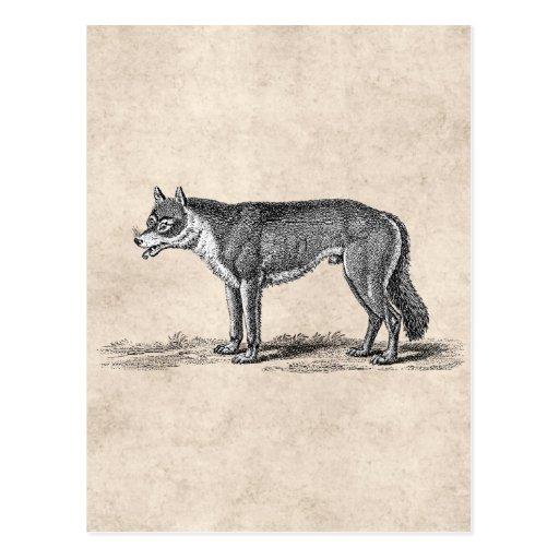 Ejemplo del lobo del vintage - plantilla de los postales