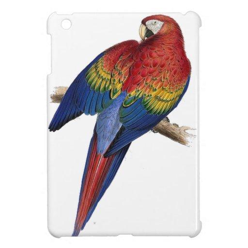 Ejemplo del Macaw del escarlata