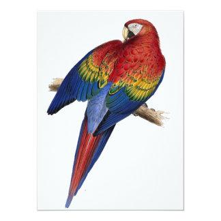 """Ejemplo del Macaw del escarlata Invitación 5.5"""" X 7.5"""""""