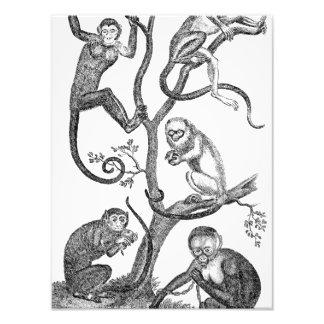 Ejemplo del mono del vintage - monos 1800's impresiones fotográficas