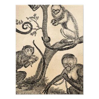 Ejemplo del mono del vintage - monos 1800's arte fotografico