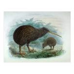 Ejemplo del norte del pájaro del vintage del kiwi