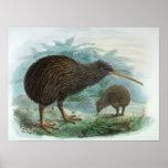 Ejemplo del norte del pájaro del vintage del kiwi  poster