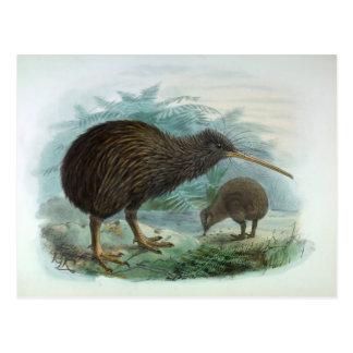 Ejemplo del norte del pájaro del vintage del kiwi tarjetas postales