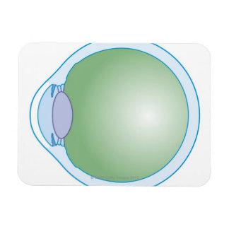 Ejemplo del ojo humano imanes rectangulares