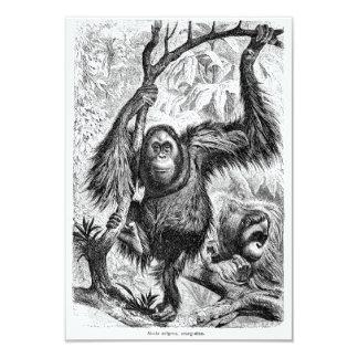 """Ejemplo del orangután del vintage - mono 1800's invitación 3.5"""" x 5"""""""
