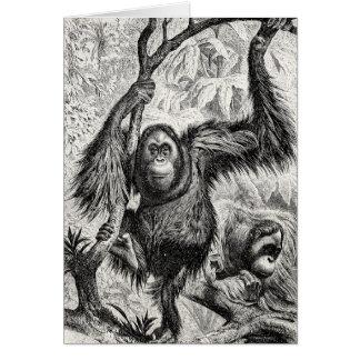 Ejemplo del orangután del vintage - mono 1800's felicitaciones